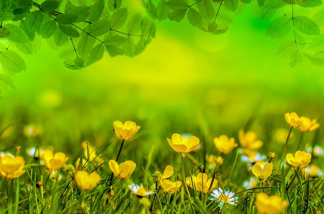 spring lawn care syracuse ny from grasshopper property service